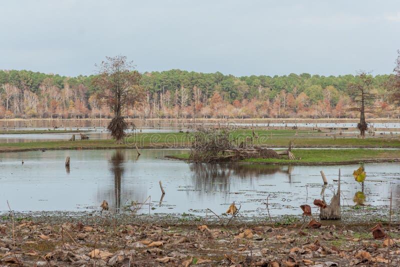 Marais et lacs du Texas central pendant l'automne image stock