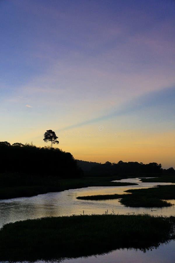Marais Kaw en Guyane française photo stock