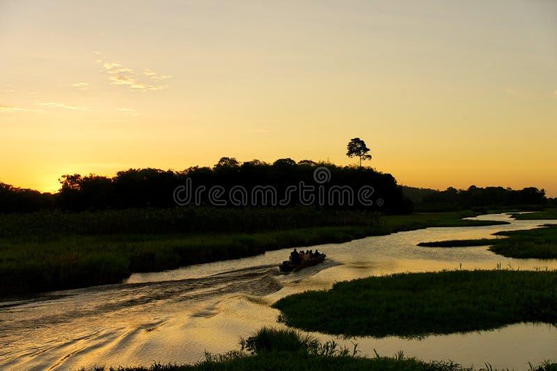 Marais Kaw en Guyane française photographie stock