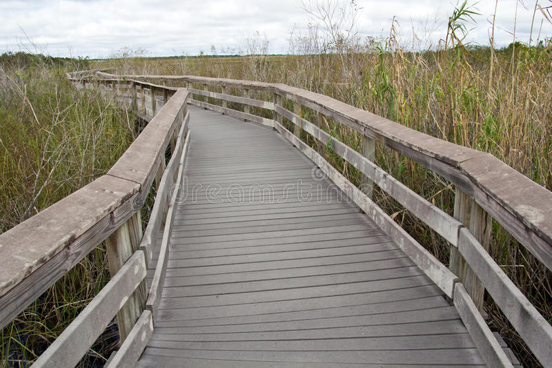 Marais nationaux. Parc, traînée d'Anhinga photos libres de droits