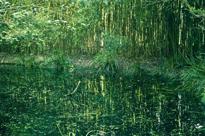 Marais vert image stock