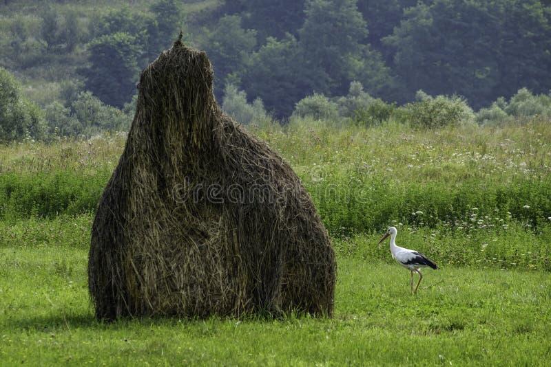 Maramures, Roumanie, l'Europe, paysage photo stock
