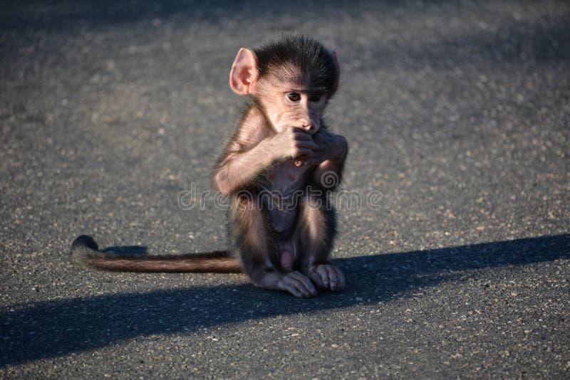A maravilha do bebê fotografia de stock royalty free