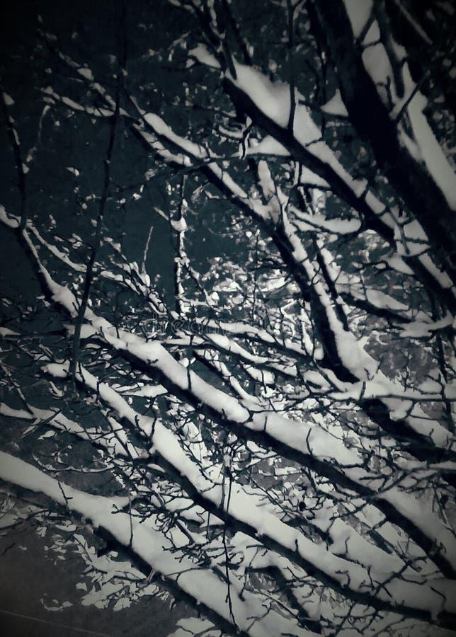 Maravilha do inverno imagens de stock
