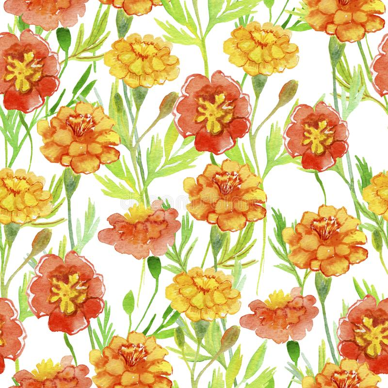 Maravilla anaranjada aislada Flores anaranjadas con las hojas verdes Pintura inconsútil de la acuarela stock de ilustración