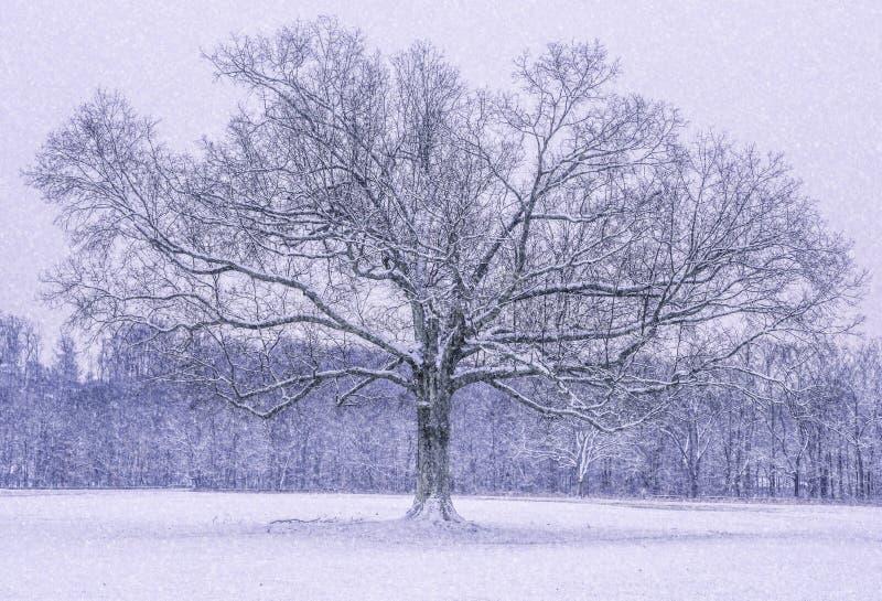 Maravillas del invierno de New Jersey fotos de archivo