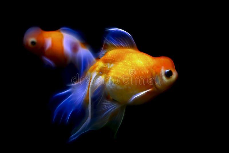 Marble phoenix egg fish stock photography