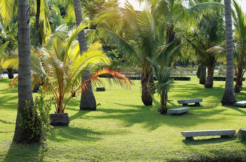 Marble seat for relaxation in garden,coconut tree on lawn in park stock photos
