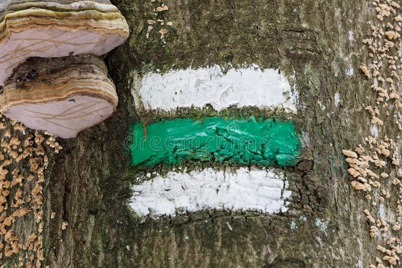 Marcação da rota do turista Sinal do turista na árvore imagens de stock
