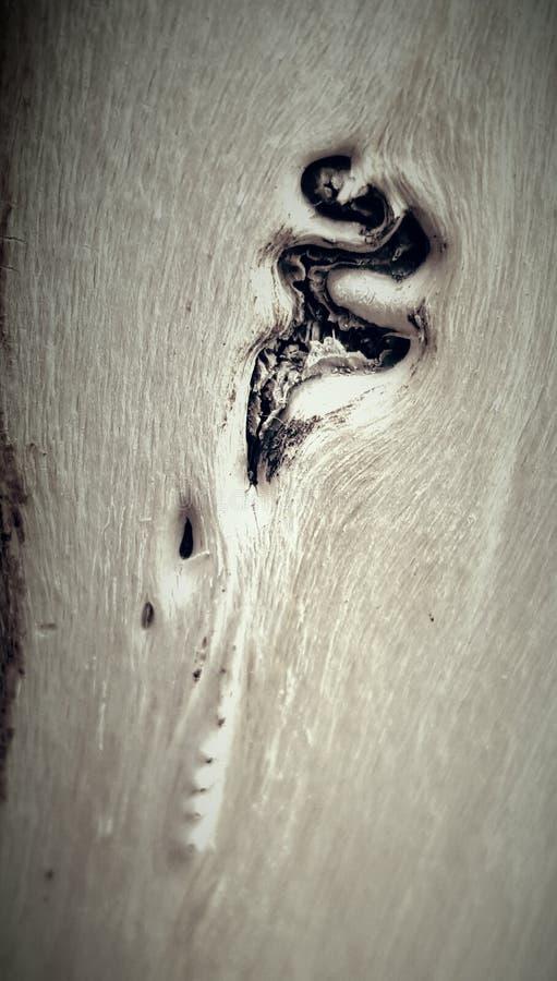 A marca de uma árvore de morte fotos de stock