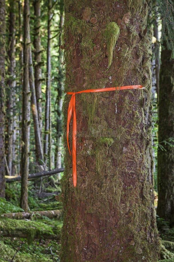 Marcador del rastro en árbol imagen de archivo libre de regalías