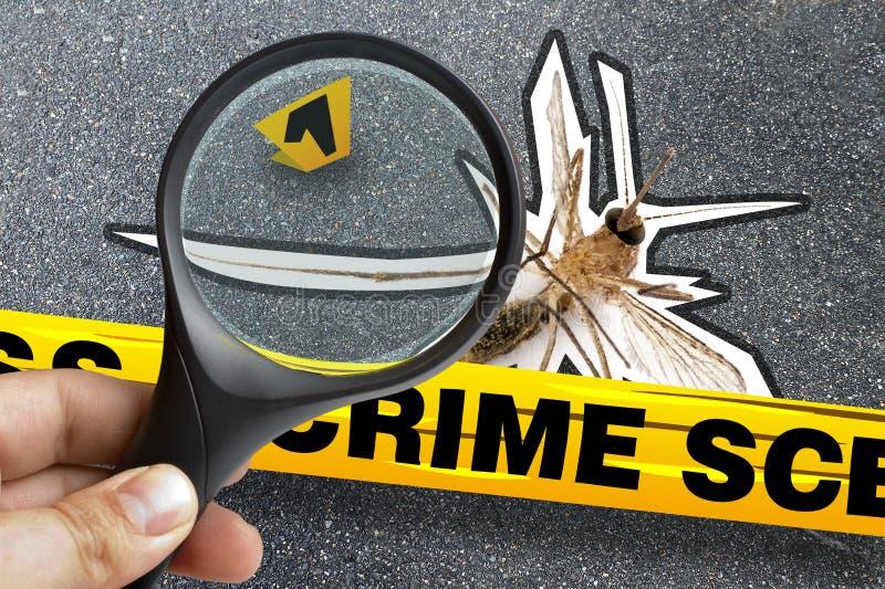 Marcador que magnifica de la escena del crimen muerta del primer del mosquito imágenes de archivo libres de regalías