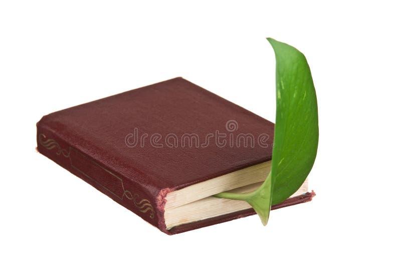 Marcador verde da folha em um livro foto de stock royalty free