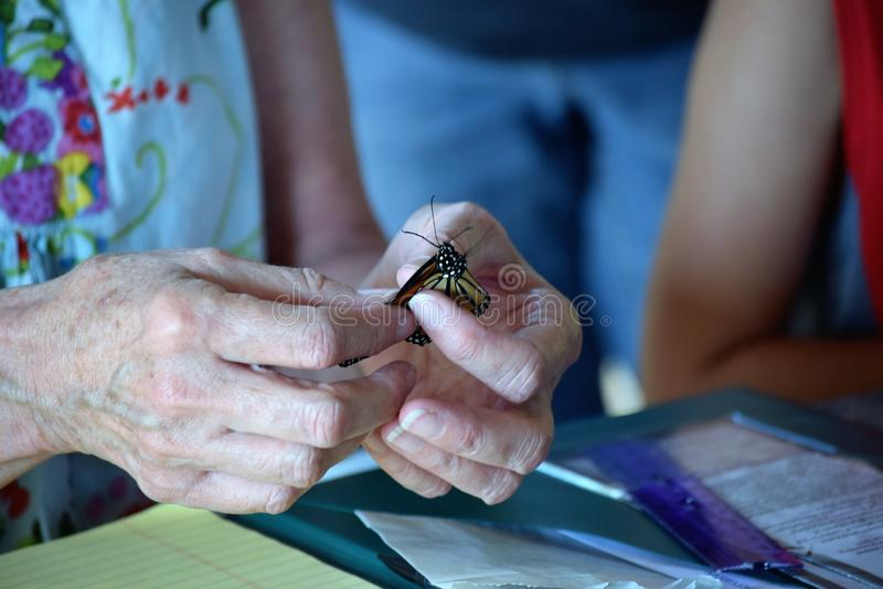 Marcar mariposas de monarca con etiqueta fotografía de archivo libre de regalías