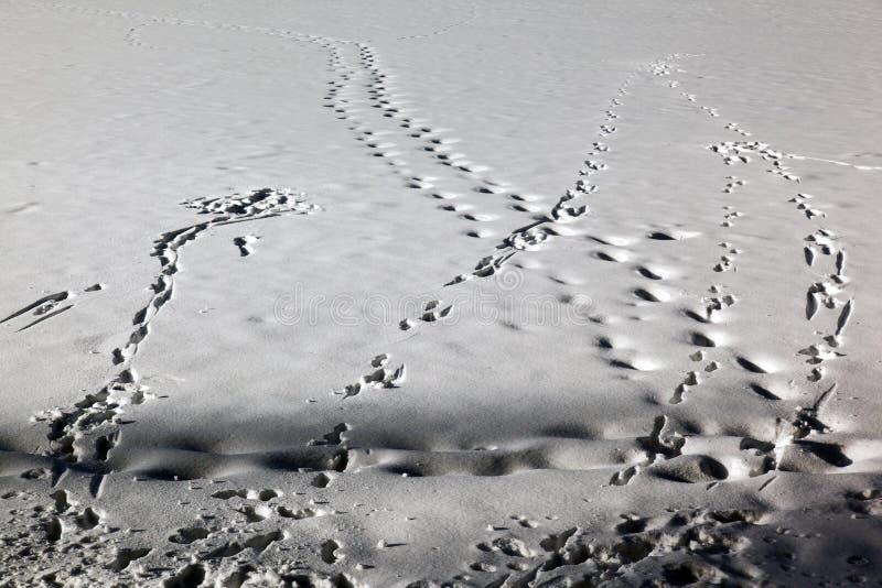 Marcas de la huella y rastros y marcas del esquí en el paisaje nevado en St Moritz Switzerland foto de archivo libre de regalías