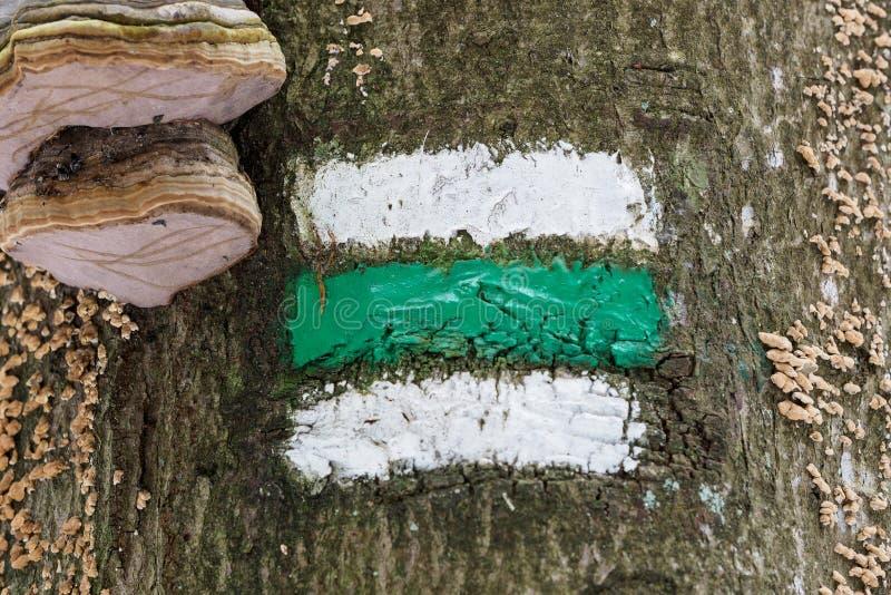 Marcatura dell'itinerario turistico Segno turistico sull'albero immagini stock