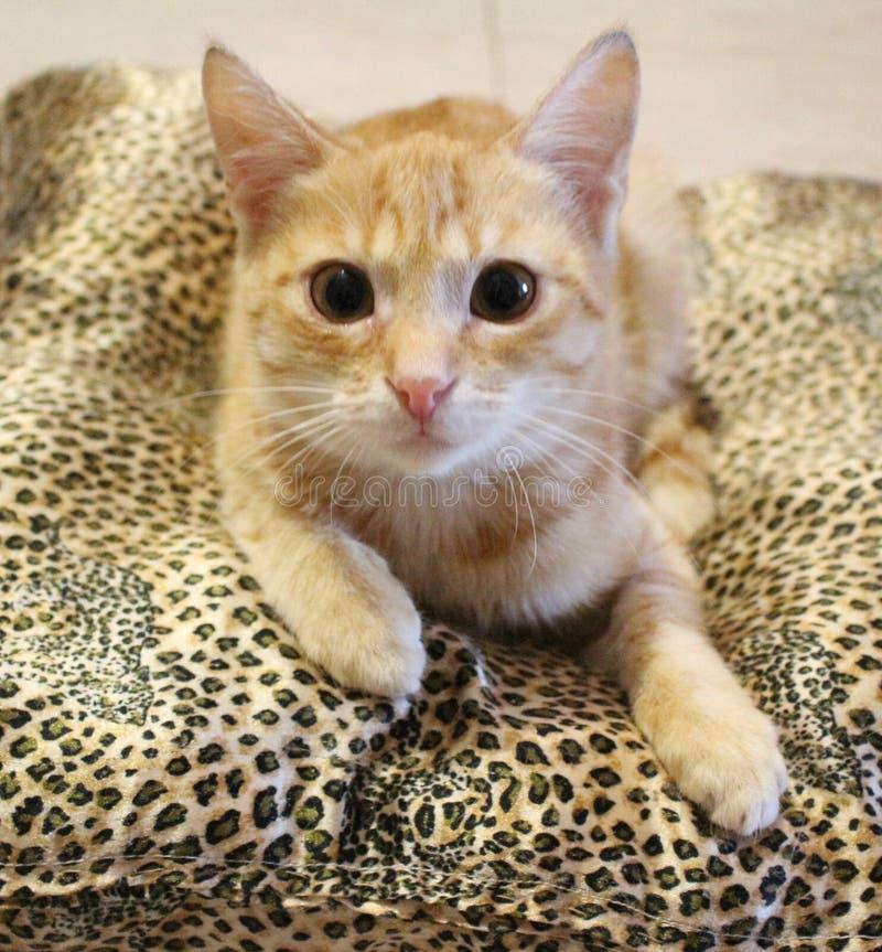 Marcel Cat royalty-vrije stock afbeeldingen