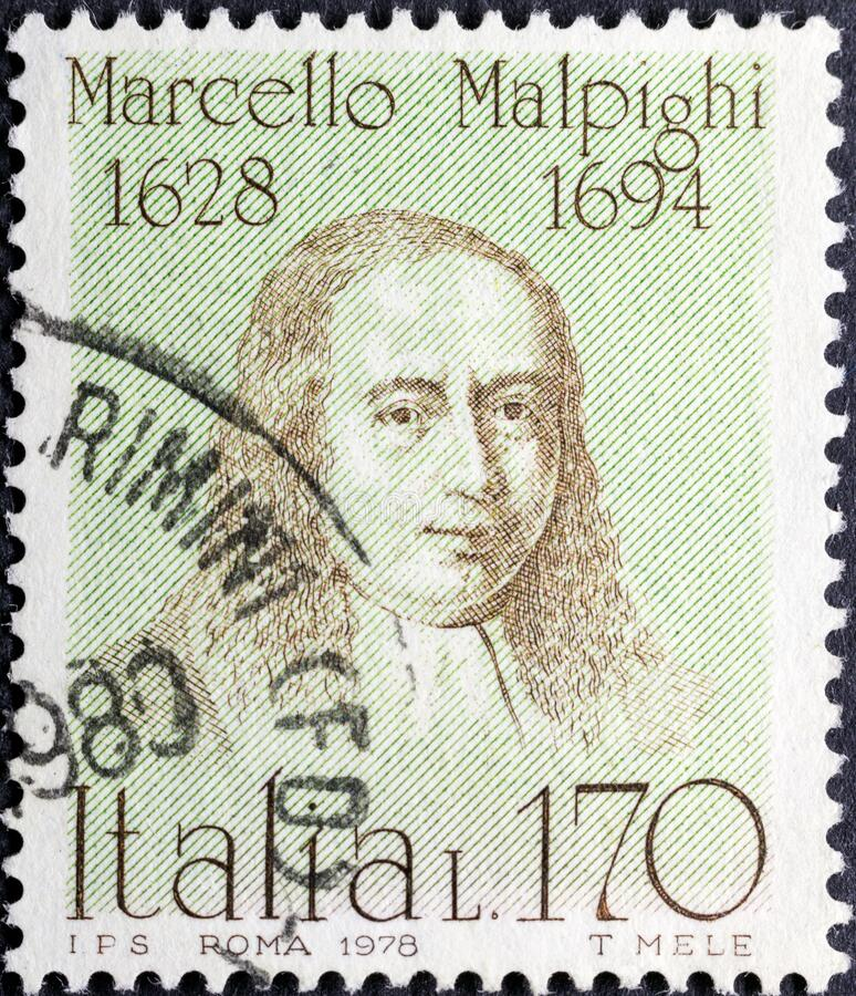 Free Marcello Malpighi 1628 - 1694, An Italian Biologist And Physician Stock Photography - 191817902