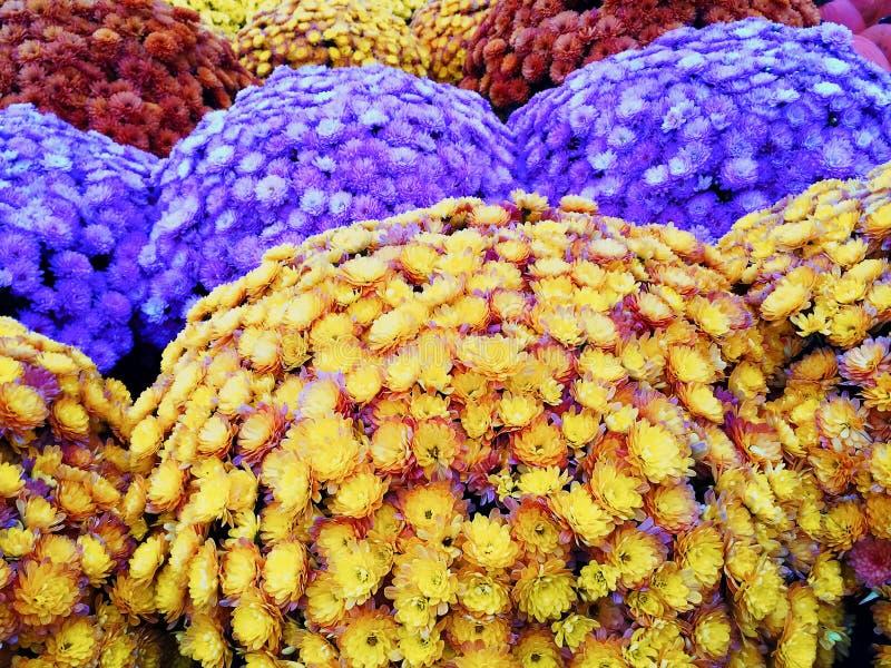 Marché avec les chrysanthèmes colorés d'automne image stock