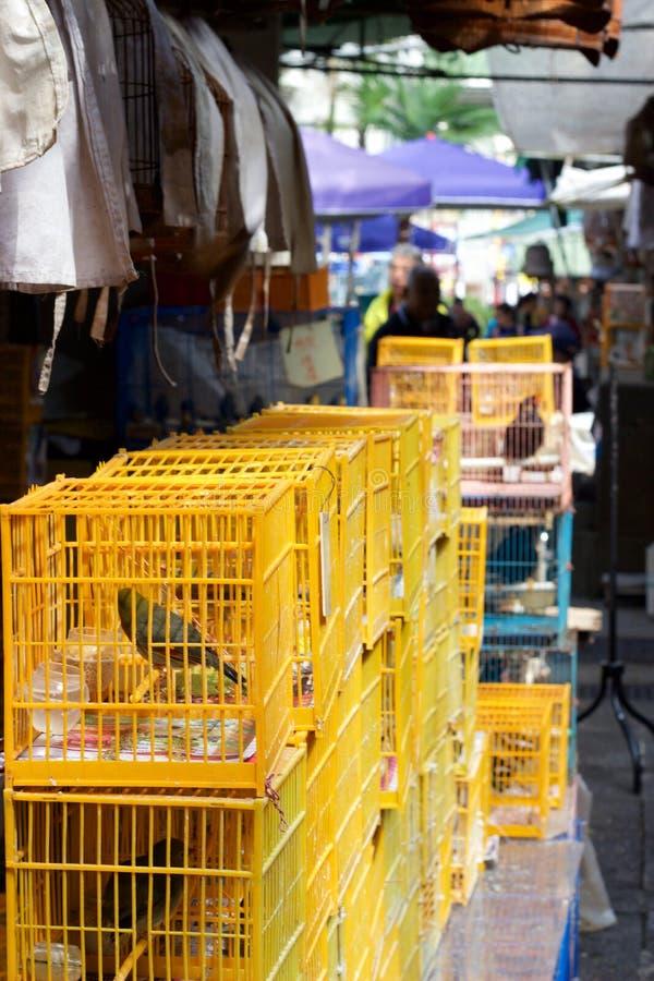 Marché de Hong Kong : cages en plastique chez Yuen Po Bird Garden photographie stock libre de droits