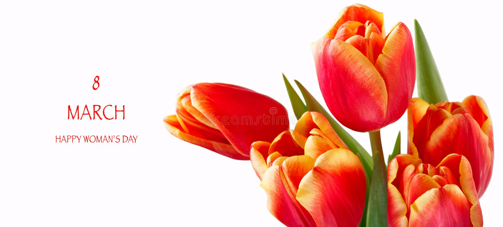 8 march happy womens day. Red tulips Isolated white background stock photography