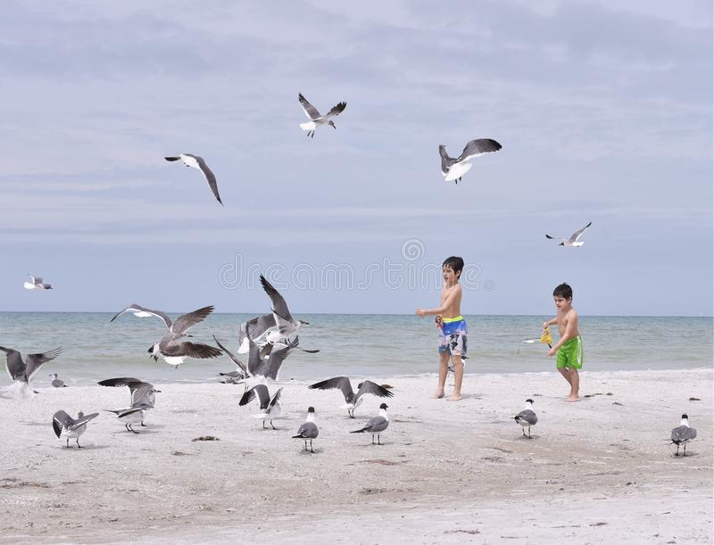 March 2019, Indian Rocks Beach, Florida - three children on the pristine shores of a Tampa area beach are feeding stock image