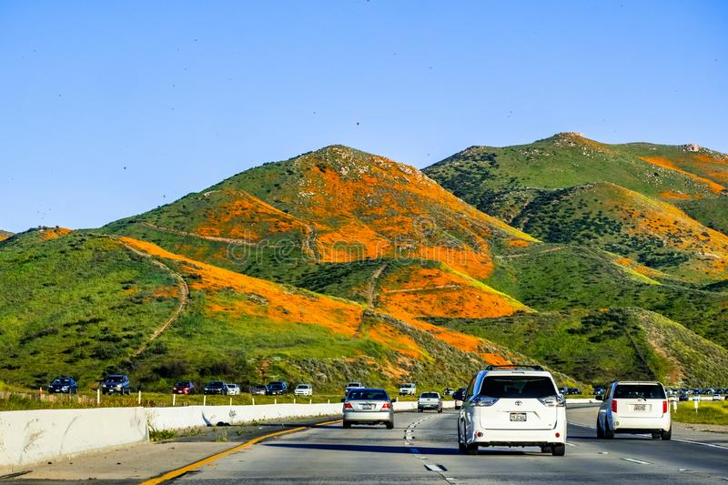 March 16, 2019 Lake Elsinore / CA / USA - Cars driving through hills covered in California poppies during the superbloom in south stock images