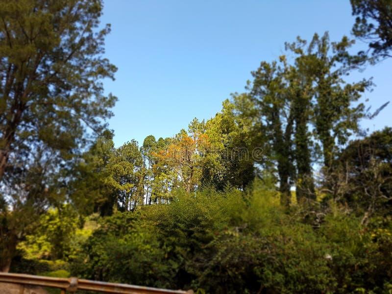 Marchant, belle nature, ciel, vert photos libres de droits