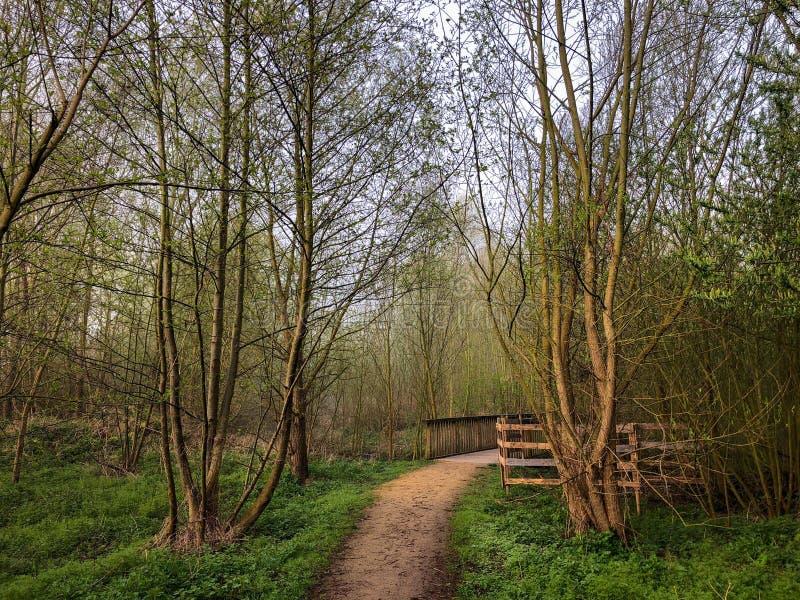 Marchant dans la forêt, chemin pour jeter un pont sur, la Belgique, l'Europe images libres de droits