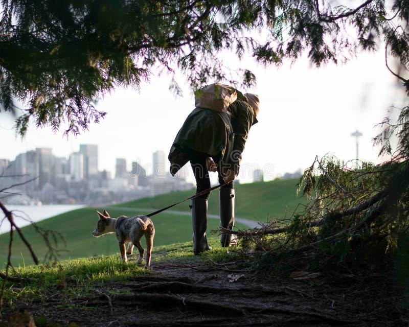 Marchant le chien dans la ville photographie stock