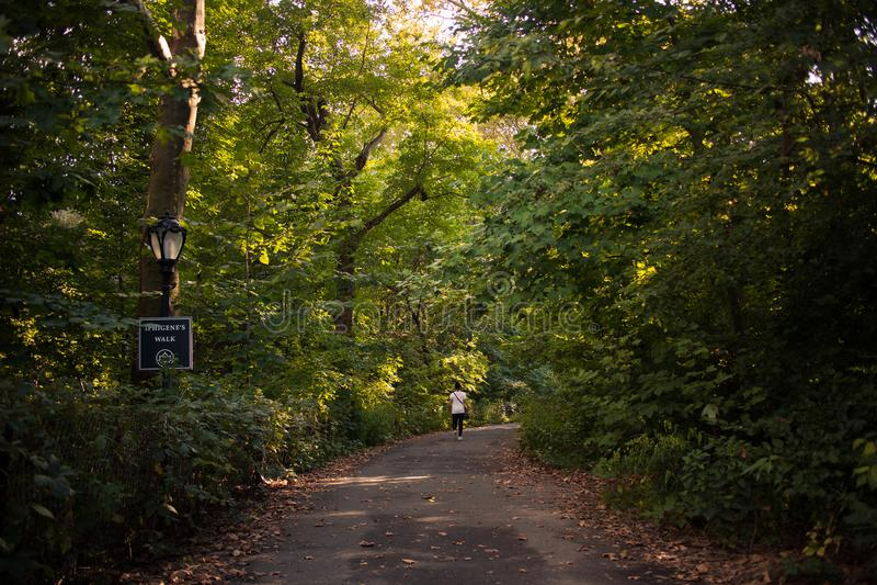 Marchant un chemin par les arbres dans le Central Park, New York City images libres de droits