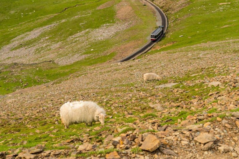 Marchant vers le bas du bâti Snowdon sur le chemin de Llanberis, Snowdonia photo stock