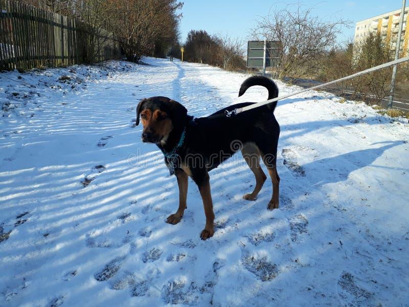 marche comme un flocon de neige image libre de droits