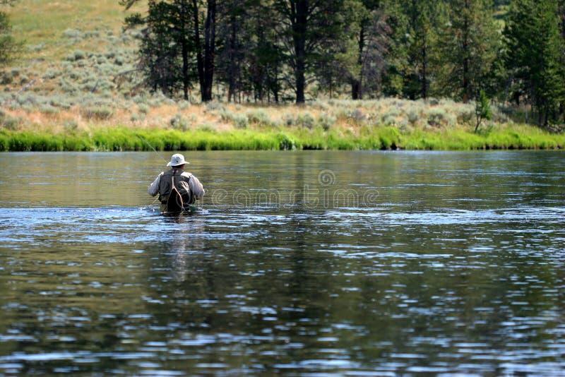 Marche dans l'eau dans le fleuve de yellowstone images libres de droits