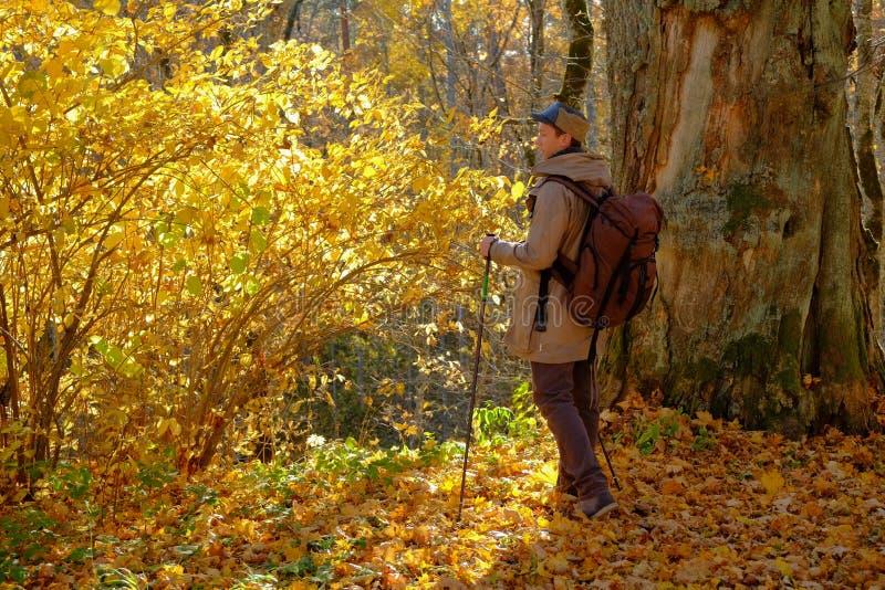 Marche dans la forêt photo libre de droits