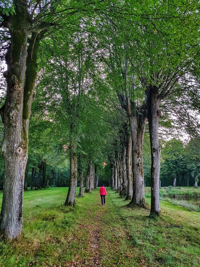 Marche dans les bois image libre de droits