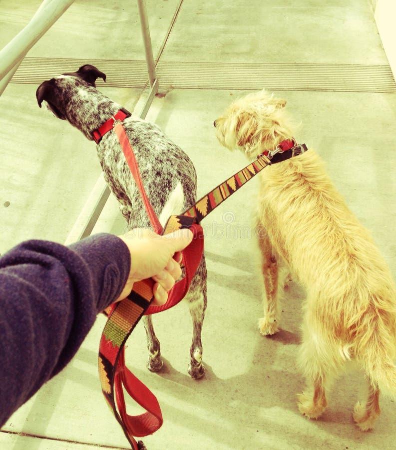 Marche de chien image stock