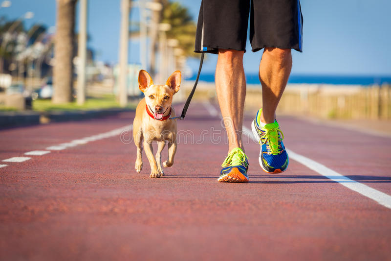 Marche de chien et de propriétaire image libre de droits