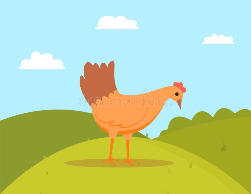 Marche de volaille extérieure, vecteur de poulet de Pékin illustration libre de droits