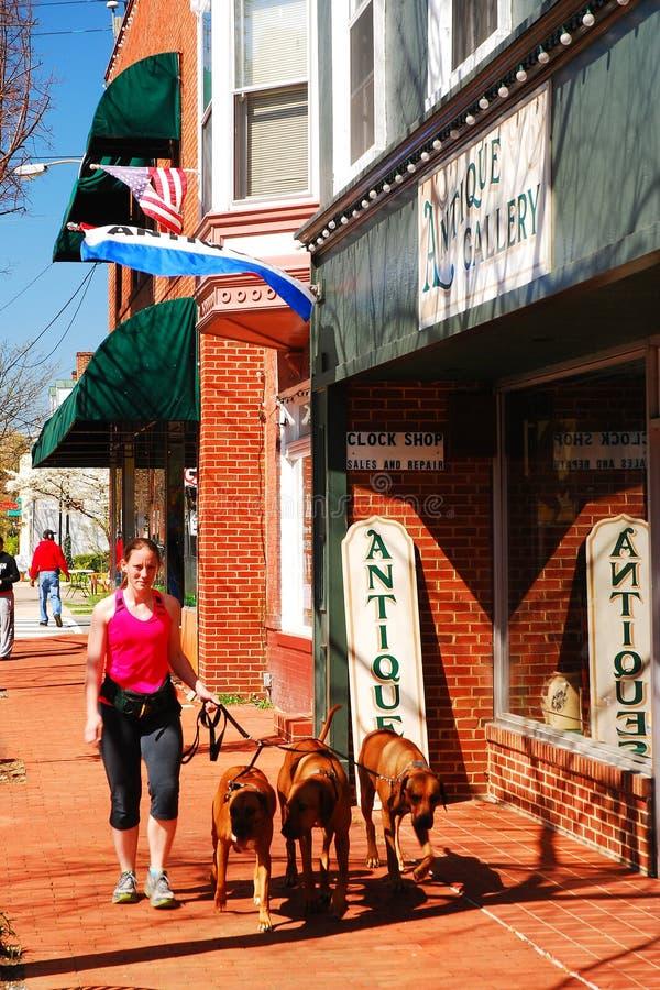 Marche des chiens dans le centre ville image stock