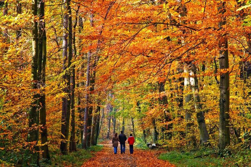 Marche en stationnement d'automne images stock