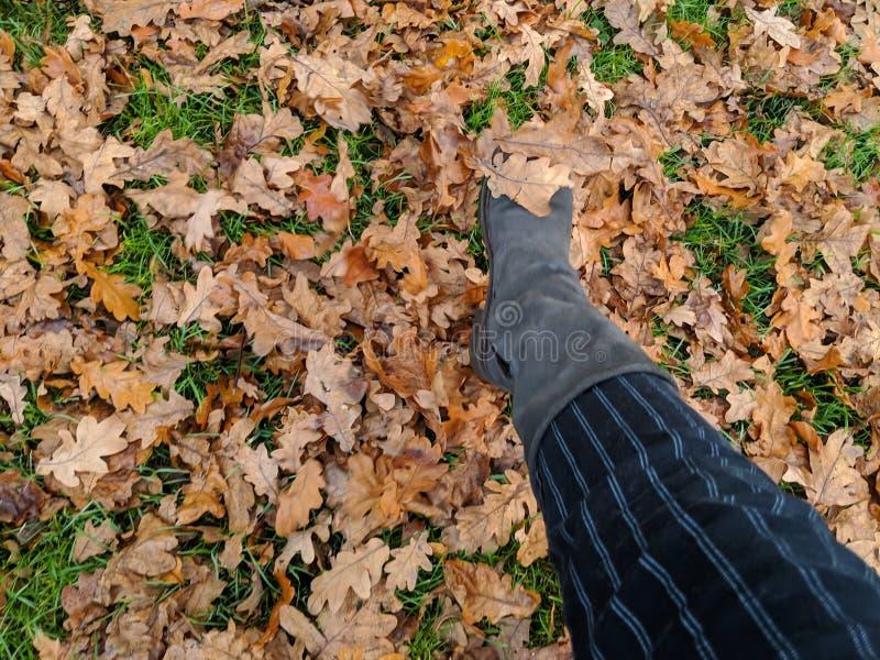 Marche par des lames d'automne photo stock
