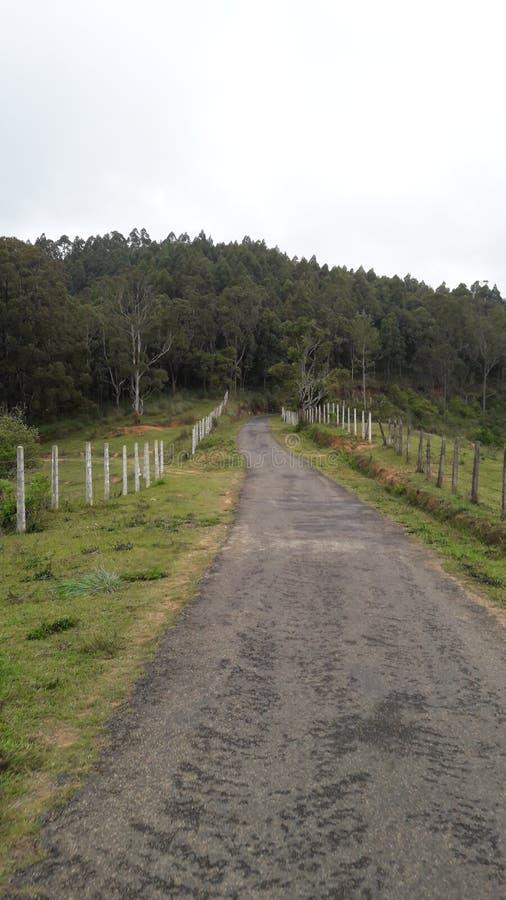 Marche par l'uva d'animal de Boralanda photographie stock
