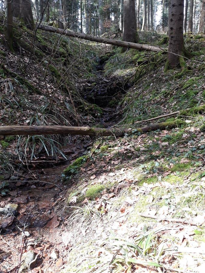 Marche par la forêt photo libre de droits