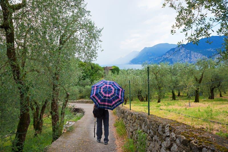 Marche par le paysage méditerranéen avec le verger olive sur un Ra photographie stock libre de droits