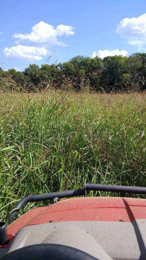 Marcher l'herbe photos stock