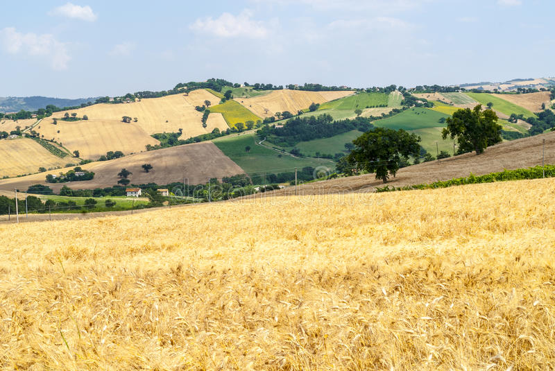 Download Marches (Italy), landscape stock photo. Image of italy - 28774798