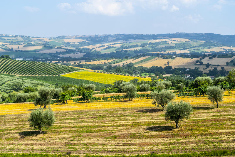 Marches (Italy), landscape royalty free stock photo
