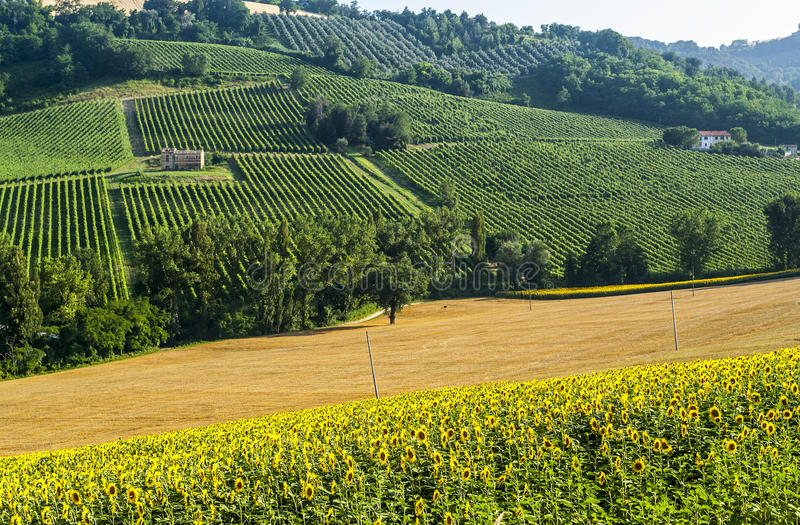 Download Marches (Italy), landscape stock photo. Image of vineyard - 28816474