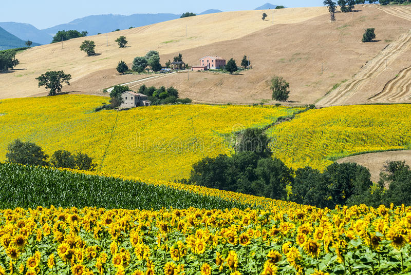 Download Marches (Italy), Landscape Stock Photo - Image: 28899540